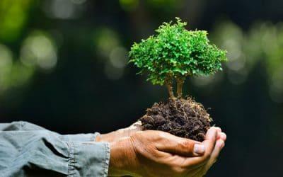 ارتباط با کارشناس فضای سبز دهکده