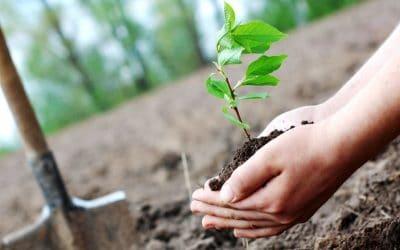 نکات مهم برای غرس نهال میوه
