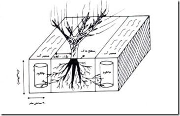 چالکود درختان