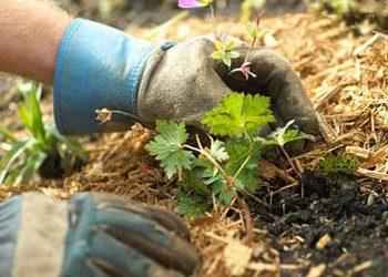 ۲۰ نکته مهم برای کاشت درست نهال های میوه