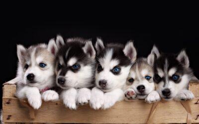 شیوه نامه نگهداری سگ در مجتمع مسکونی خانه کرج